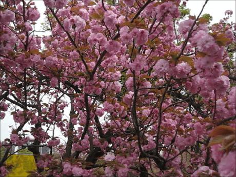 スナップショット 7 (2014-04-14 0-47)