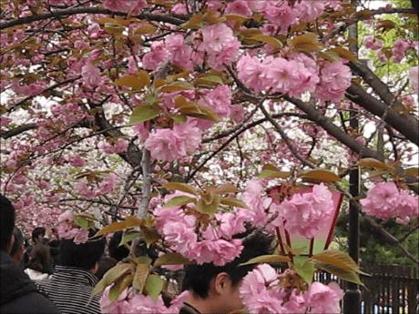 スナップショット 3 (2014-04-14 0-46)