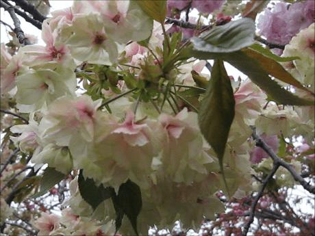 スナップショット 2 (2014-04-14 0-45)