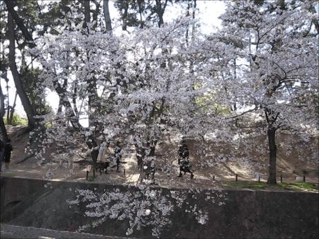 夙川~苦楽園で桜の花見