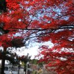京都の紅葉2014 真如堂ほか
